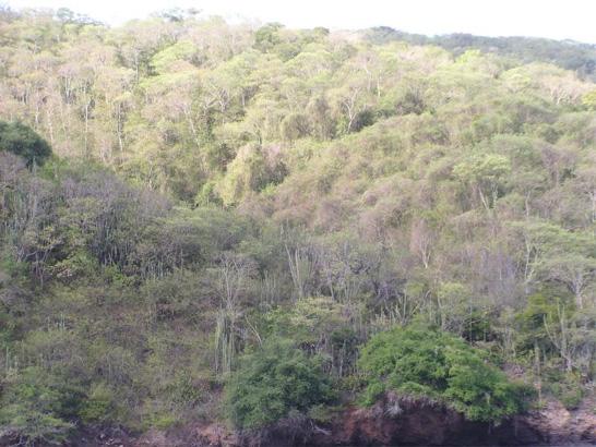 Dry%20forest.jpg
